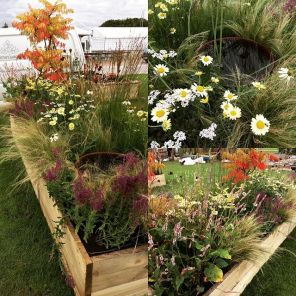 Silver Award for Planting, A Little Piece, Harrogate Flower Show, Autumn 2017